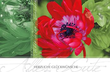 Grußkarte rote Blüte